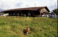 T3616. Abandoned station. Bukittinggi. Sumatra. Indonesia. 1992.